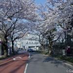 Sakura 2015 - Cimetière Yanaka (6)