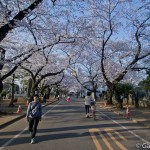 Sakura 2015 - Cimetière Yanaka (9)