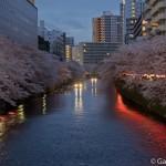 Sakura 2015 - Meguro Gawa (1)