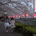 Sakura 2015 - Meguro Gawa (19)