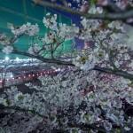 Sakura 2015 - Meguro Gawa (23)
