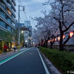 Sakura 2015 - Meguro Gawa (6)