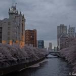 Sakura 2015 - Meguro Gawa (7)