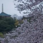 Sakura 2015 - Naritasan (1)
