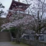 Sakura 2015 - Naritasan (10)
