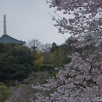 Sakura 2015 - Naritasan (11)