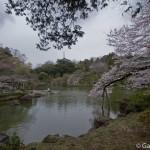 Sakura 2015 - Naritasan (12)