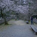 Sakura 2015 - Naritasan (2)
