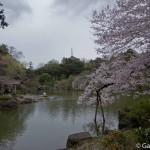 Sakura 2015 - Naritasan (3)