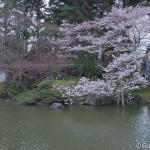 Sakura 2015 - Naritasan (4)
