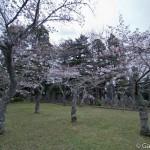 Sakura 2015 - Naritasan (5)