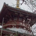 Sakura 2015 - Naritasan (6)