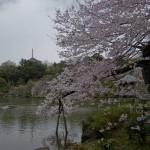 Sakura 2015 - Naritasan (7)