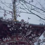 Sakura 2015 - Naritasan (9)