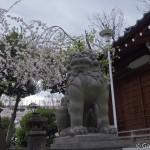 Sakura 2015 - Parc Sumida (1)
