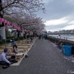 Sakura 2015 - Parc Sumida (10)