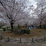 Sakura 2015 - Parc Sumida (16)