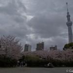Sakura 2015 - Parc Sumida (18)