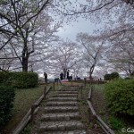 Sakura 2015 - Parc Sumida (21)