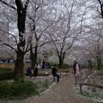 Sakura 2015 - Parc Sumida (3)