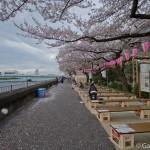 Sakura 2015 - Parc Sumida (6)