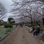 Sakura 2015 - Parc Sumida (8)