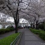 Sakura 2015 - Parc Sumida (9)