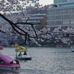 Sakura 2015 - Parc Ueno (11)