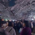 Sakura 2015 - Parc Ueno (15)