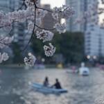 Sakura 2015 - Parc Ueno (17)