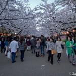 Sakura 2015 - Parc Ueno (2)