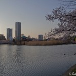 Sakura 2015 - Parc Ueno (4)