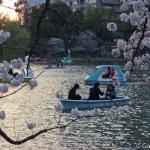 Sakura 2015 - Parc Ueno (8)