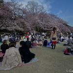 Sakura 2015 - Shinjuku Gyoen (1)