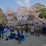 Sakura 2015 - Shinjuku Gyoen (5)