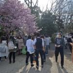 Sakura 2015 - Shinjuku Gyoen (7)