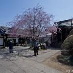 Sakura 2015 - Tennoji (3)