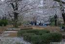 Sumidagawa et le parc Sumida au pied de la Skytree