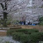 Sumidagawa et parc Sumida à Tokyo  (1)