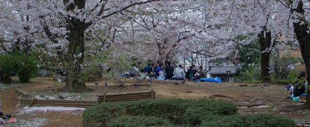 Parc Sumida au pied de la Skytree