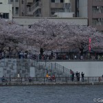 Sumidagawa et parc Sumida à Tokyo  (10)
