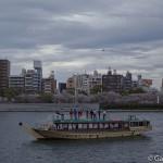 Sumidagawa et parc Sumida à Tokyo  (12)