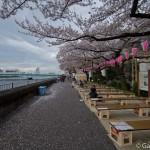 Sumidagawa et parc Sumida à Tokyo  (15)