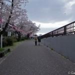 Sumidagawa et parc Sumida à Tokyo  (18)