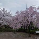 Sumidagawa et parc Sumida à Tokyo  (19)