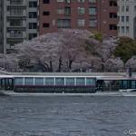 Sumidagawa et parc Sumida à Tokyo  (2)