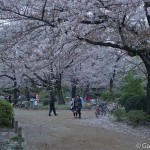 Sumidagawa et parc Sumida à Tokyo  (20)