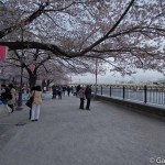 Sumidagawa et parc Sumida à Tokyo  (21)