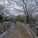 Sumidagawa et parc Sumida à Tokyo  (25)