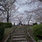 Sumidagawa et parc Sumida à Tokyo  (26)